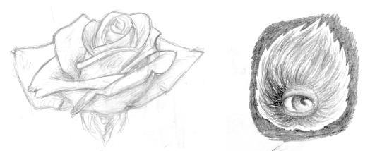 Daily Drawing sketches