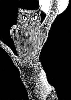 Puffed-up Owl
