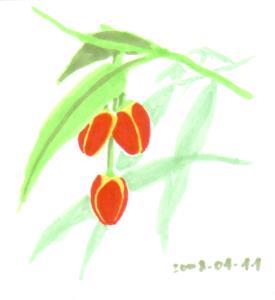Bug Peppers